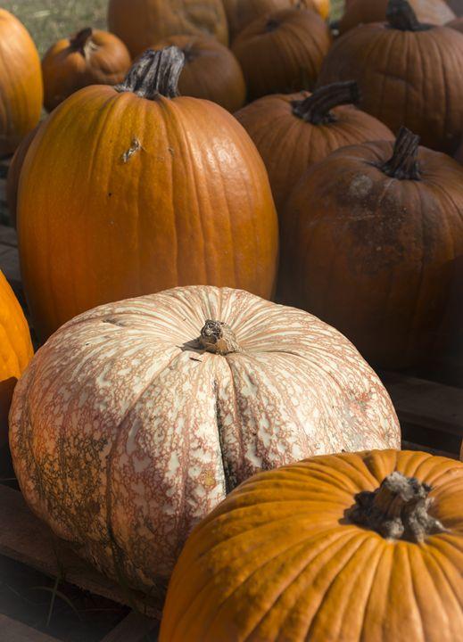 Mottled Pumpkin in group - David J Riffey