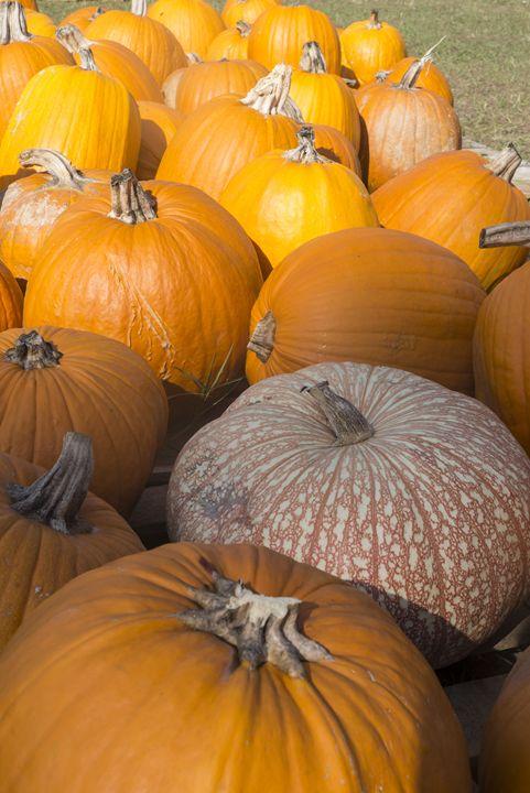 Mottled Pumpkin - David J Riffey