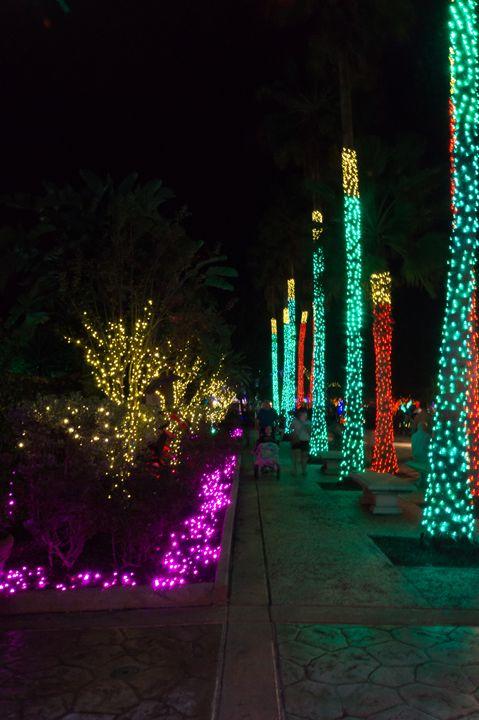Christmas Lights Path - David J Riffey