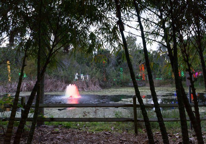 Christmas Lights Fountain - David J Riffey