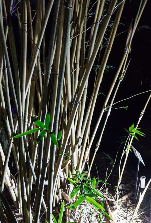 Bambo with Up Lighting - David J Riffey