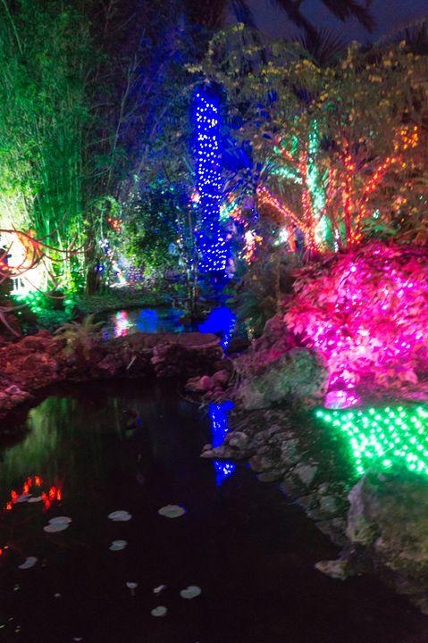 Christmas Lights and Pond - David J Riffey