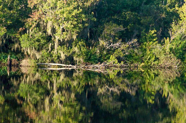 Mirror Reflection Trees - David J Riffey
