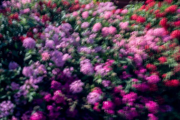 Flower Impression - David J Riffey