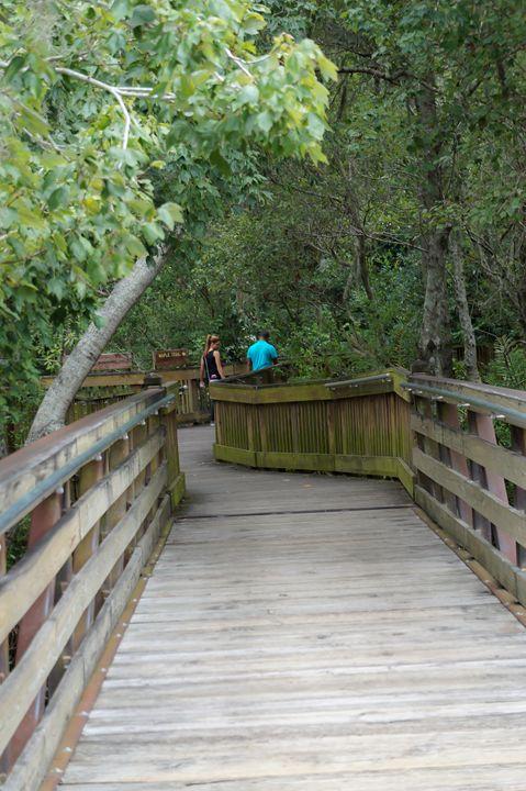 Couple on Wooded Nature Walk - David J Riffey
