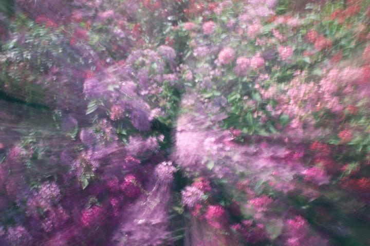 Flowers Zoom Impression - David J Riffey