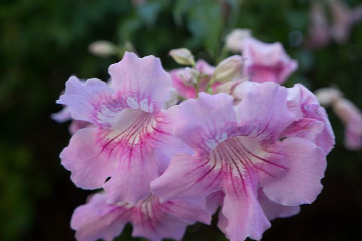 Pink Flower - David J Riffey