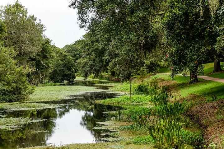 Tranquil Stream in Woods 2 - David J Riffey