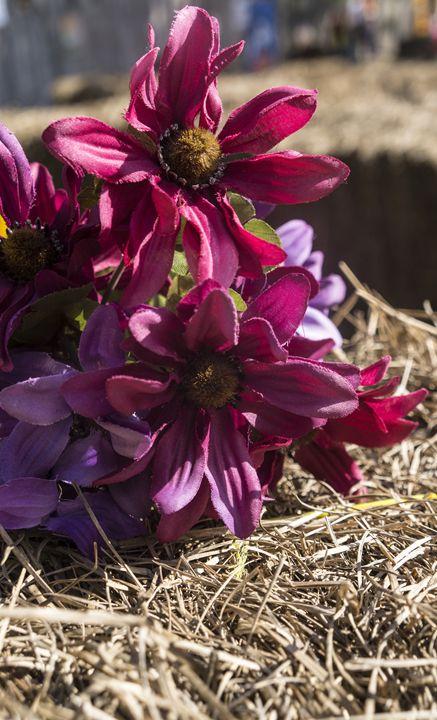 Silk Flower on Hay - David J Riffey