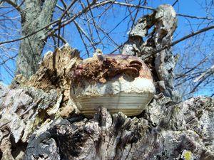 """""""Camouflage"""" ~ Lichen bowl"""