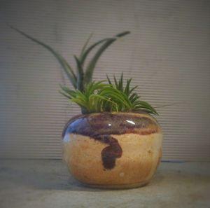 Air plant planter