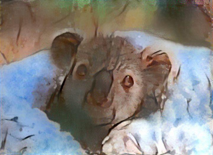 Wild animal - Alex Ovechkina