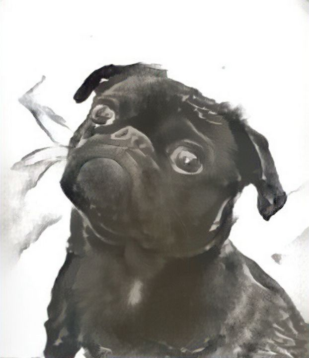 Favorite dog - Alex Ovechkina