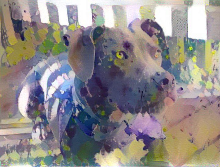 Dog with yellow eyes - Alex Ovechkina