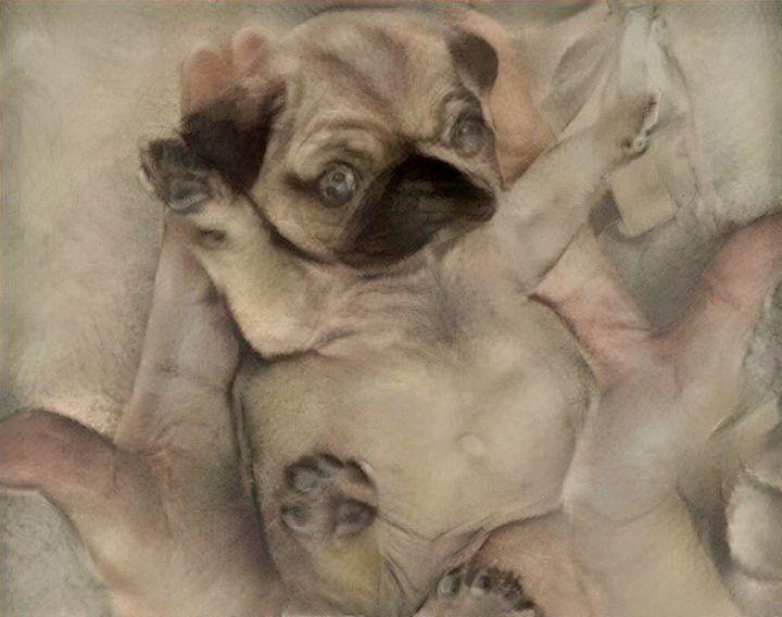 Puppy on the palms - Alex Ovechkina