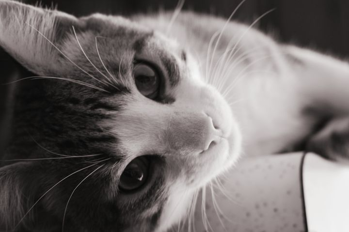 Lazy Kitten - Robyn Allen