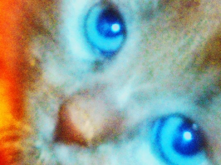 A Cat's Eye View - Bhean Spiorad Art