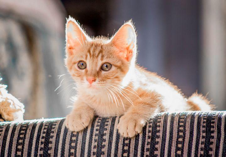 Cute Orange Tabby Cat - Faiq Designer