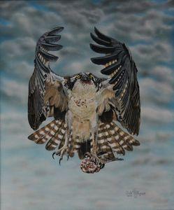 Fleck The Osprey