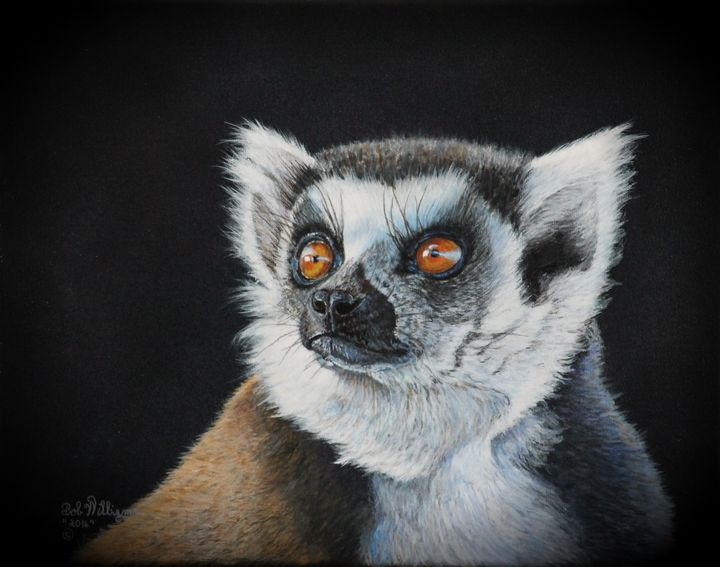 Amber Eyes......lemur - Bob Williams Fine Art
