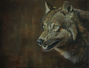 Alpha Male ......the Gray Wolf