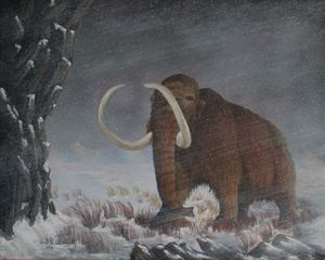 Wooly Mammoth......10,000 Years Ago