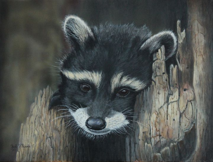 Kit...The baby raccoon painting - Bob Williams Fine Art
