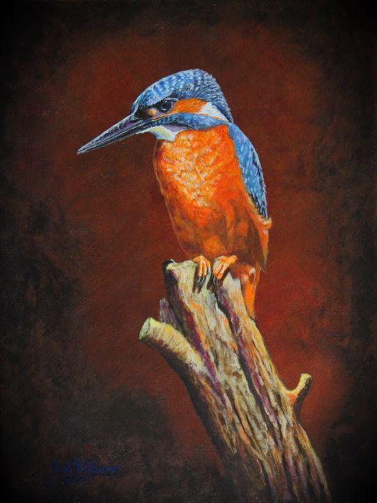 Kingfisher.....waiting For Dinner - Bob Williams Fine Art