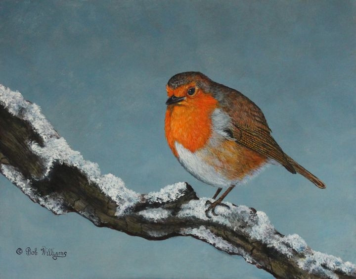 Mr Robin Toughening Out Winter - Bob Williams Fine Art