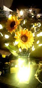 Sunflowers - D.C. Burzo