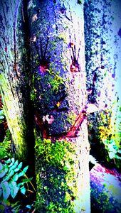 Happy Tree - D.C. Burzo