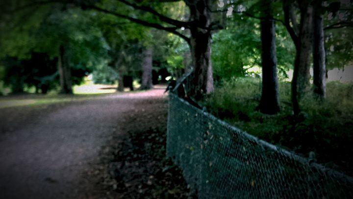 Path - D.C. Burzo