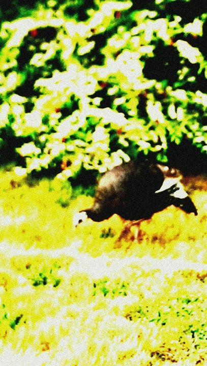 Wild Turkey - D.C. Burzo