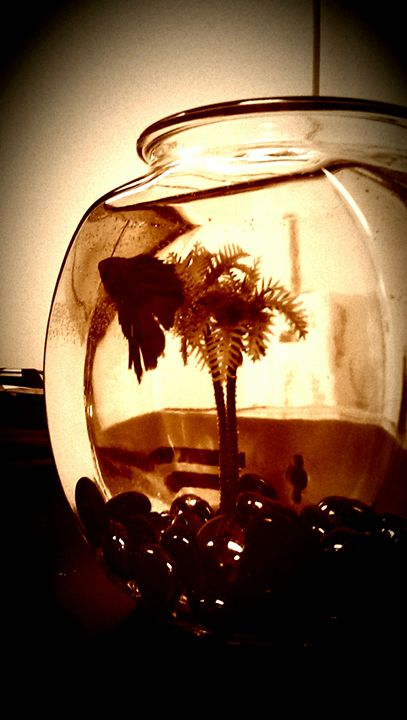 We're All In A Fish Bowl - D.C. Burzo
