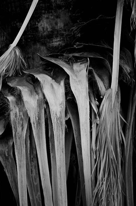 Palm Leaves - Heikkinen Art