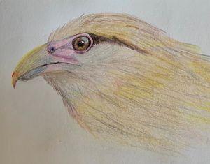 Pigua Head