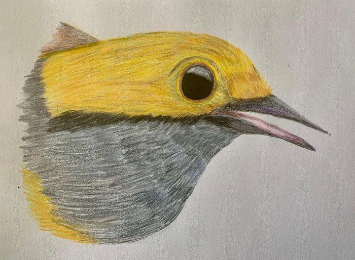 Tangara Dorada - Birds of Colombia