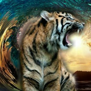 Tiger Tidal
