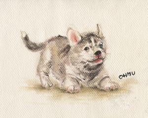 My Husky :)