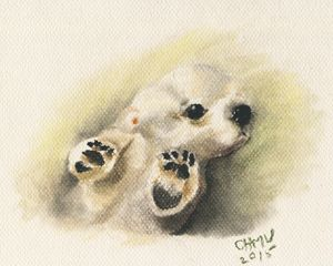 Baby Polar Bear - OHMU Gallery