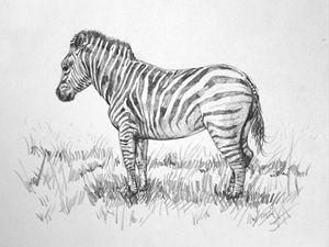 Safari Zebra - Sun Rising Art Studio