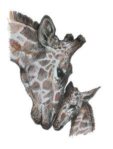 Giraffe and Baby Nuzzle