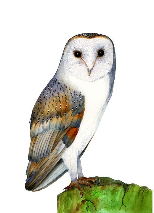 Barn Owl Bird Watercolour Painting - Alison Langridge
