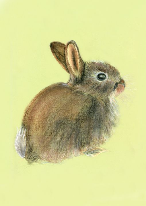 Baby Rabbit Pastel Painting Artwork - Alison Langridge