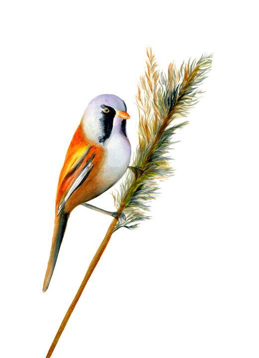 Bearded Tit Bird Watercolour Artwork - Alison Langridge