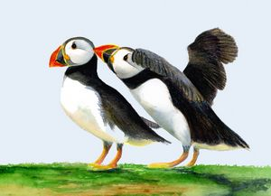 Puffin Birds Watercolour Painting