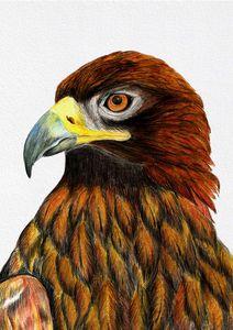 Golden Eagle Bird Watercolor Artwork
