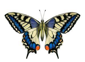 Swallowtail Butterfly Watercolor Art