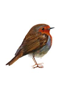 Robin Bird Watercolour Painting
