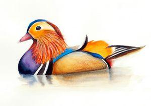 Mandarin Duck Watercolor Hand-Painte